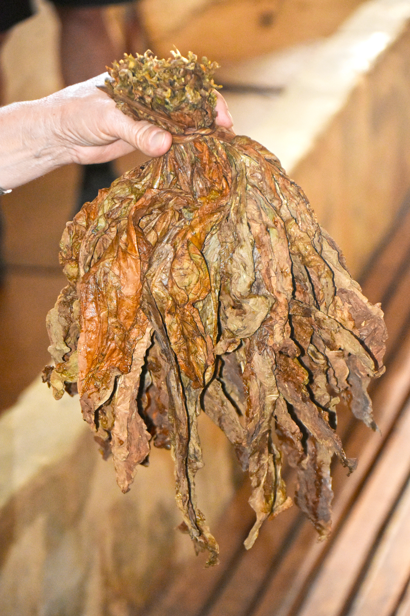 Dried Cuban Tobacco leaf bundle