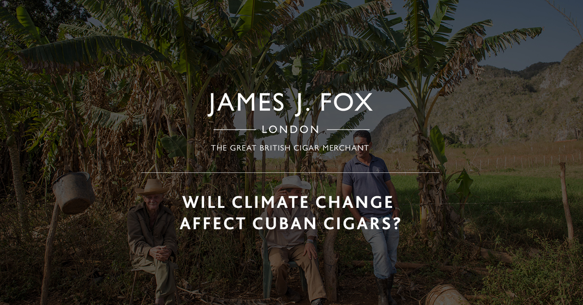 Will Climate Change Affect Cuban Cigars
